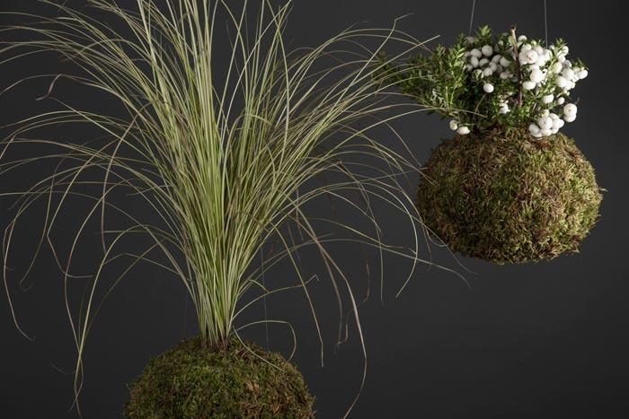 Servizio fotografico per e-commerce di piante