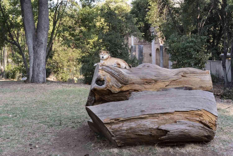 Un cane su un tronco a Villa Torlonia